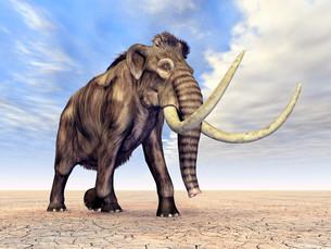 mammothの写真素材 [FYI00864834]