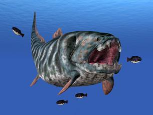 fishes_crustaceansの写真素材 [FYI00864871]