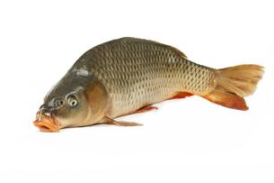 fishes_crustaceansの写真素材 [FYI00865392]