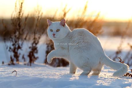 winterの写真素材 [FYI00865526]