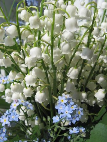 plants_flowersの素材 [FYI00865527]