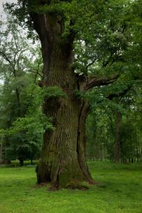 oakの写真素材 [FYI00865598]