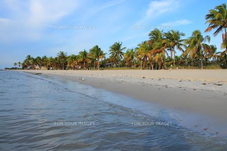 sandy beach in key westの写真素材 [FYI00865630]