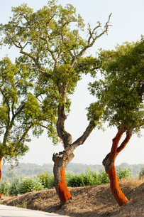 treeの写真素材 [FYI00865676]