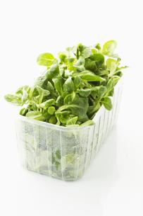 lamb's lettuceの写真素材 [FYI00866261]