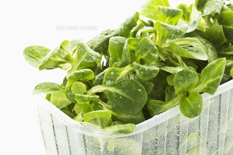 lamb's lettuceの写真素材 [FYI00866276]