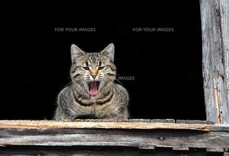 home_animalsの素材 [FYI00866368]