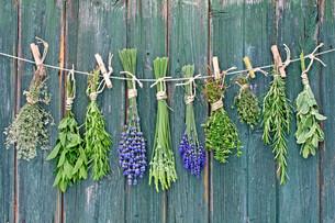 herbsの写真素材 [FYI00866404]