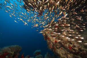 fishes_crustaceansの素材 [FYI00866480]