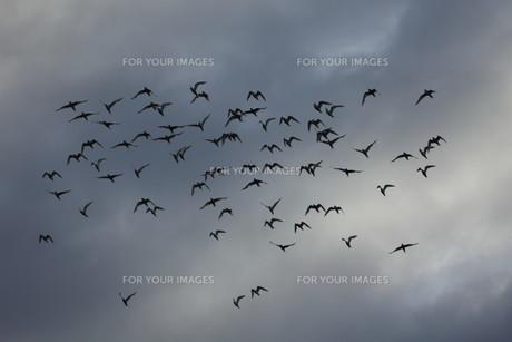 birdsの写真素材 [FYI00866599]