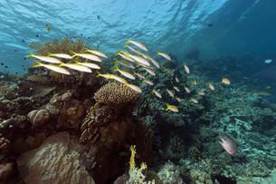 fishes_crustaceansの写真素材 [FYI00866768]