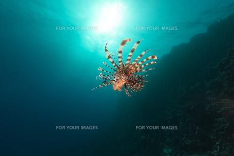 fishes_crustaceansの素材 [FYI00866780]