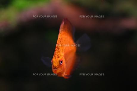fishes_crustaceansの素材 [FYI00866881]