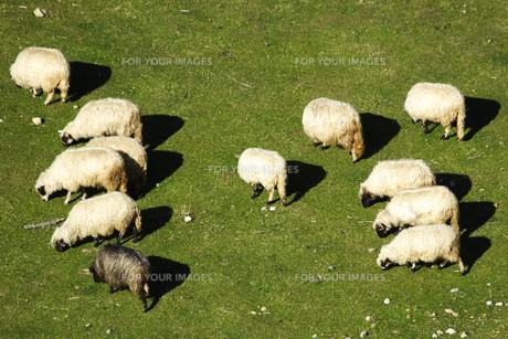 useful_animalsの写真素材 [FYI00867203]