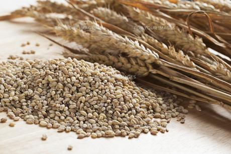 ingredients_spicesの素材 [FYI00867330]