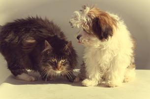 home_animalsの写真素材 [FYI00867639]