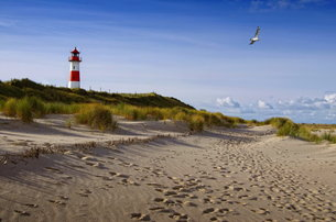 scenics with lighthouse on syltの写真素材 [FYI00867702]