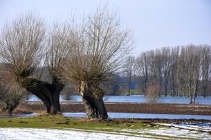kopfweiden am niederrheinの素材 [FYI00867805]