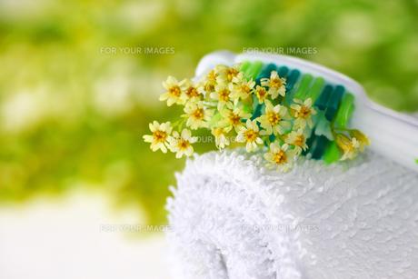 wellness_beautyの素材 [FYI00868344]