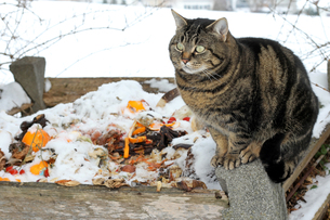 cat on the garbage heapの写真素材 [FYI00868681]