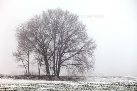 trees_forestsの写真素材 [FYI00868827]