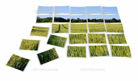 photo puzzle - traces in the cornfieldの写真素材 [FYI00869181]