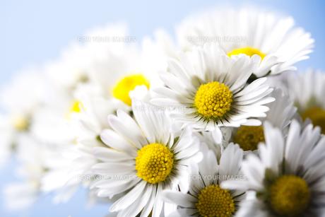 plants_flowersの写真素材 [FYI00869240]