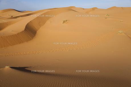 africaの写真素材 [FYI00869379]