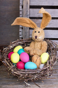 easter bunnyの写真素材 [FYI00870121]