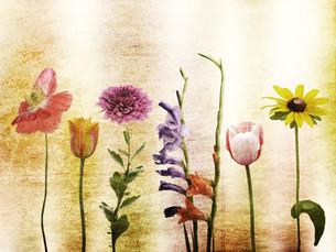 flowerの写真素材 [FYI00870127]