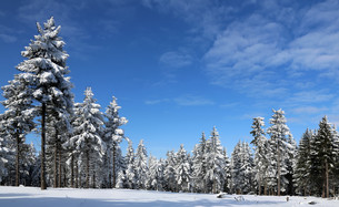 snowy winter forestの素材 [FYI00870291]