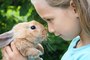 rabbitの写真素材 [FYI00870297]