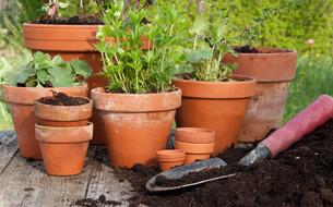 planting timeの素材 [FYI00870322]