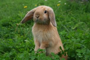 rabbitの写真素材 [FYI00870326]