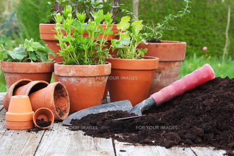 plants_flowersの素材 [FYI00870358]