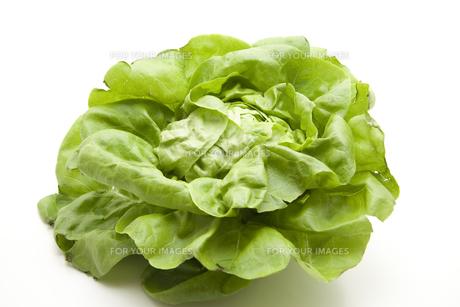 lettuceの写真素材 [FYI00870696]