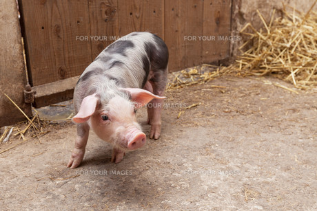 useful_animalsの写真素材 [FYI00870706]