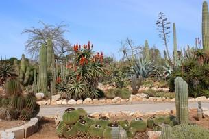cactus gardenの写真素材 [FYI00870715]