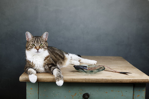 home_animalsの写真素材 [FYI00870970]