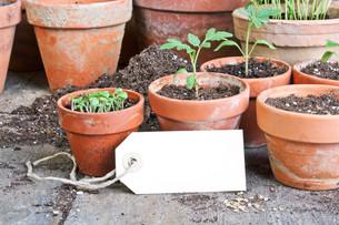 plants_flowersの素材 [FYI00871003]