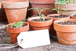 plants_flowersの素材 [FYI00871019]