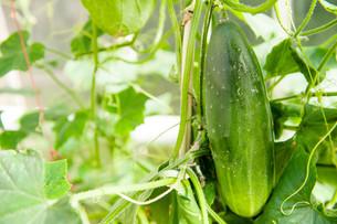 fruits_vegetablesの写真素材 [FYI00871234]