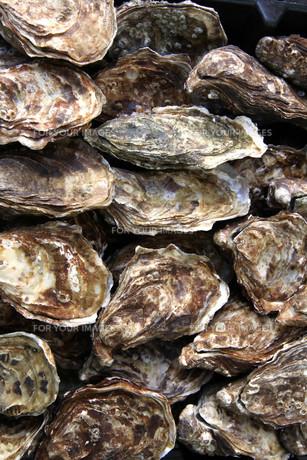 fresh oysters in la rochelle. franceの写真素材 [FYI00871452]