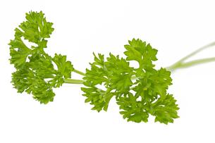 fresh parsley on white backgroundの写真素材 [FYI00871519]