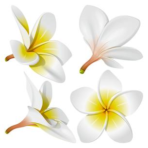 plants_flowersの素材 [FYI00871578]