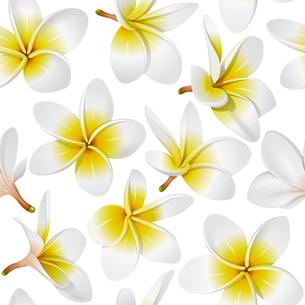 plants_flowersの素材 [FYI00871597]