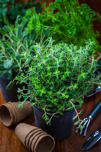 plants_flowersの写真素材 [FYI00871683]