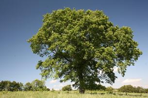 treeの写真素材 [FYI00871720]