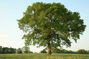 treeの写真素材 [FYI00871740]
