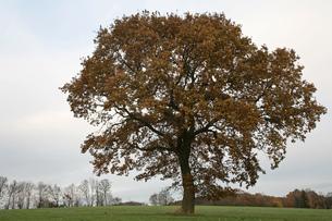treeの写真素材 [FYI00872103]